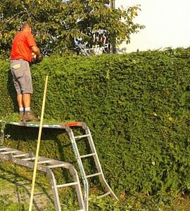 Obrezovanje grmovnic, živih meja in dreves
